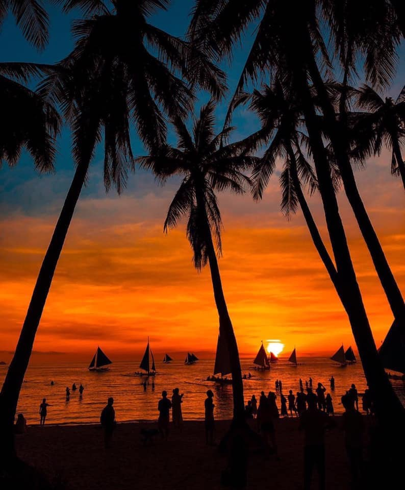 sunset in boracay palm trees silhouette